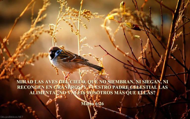 mateo_6.26.jpg